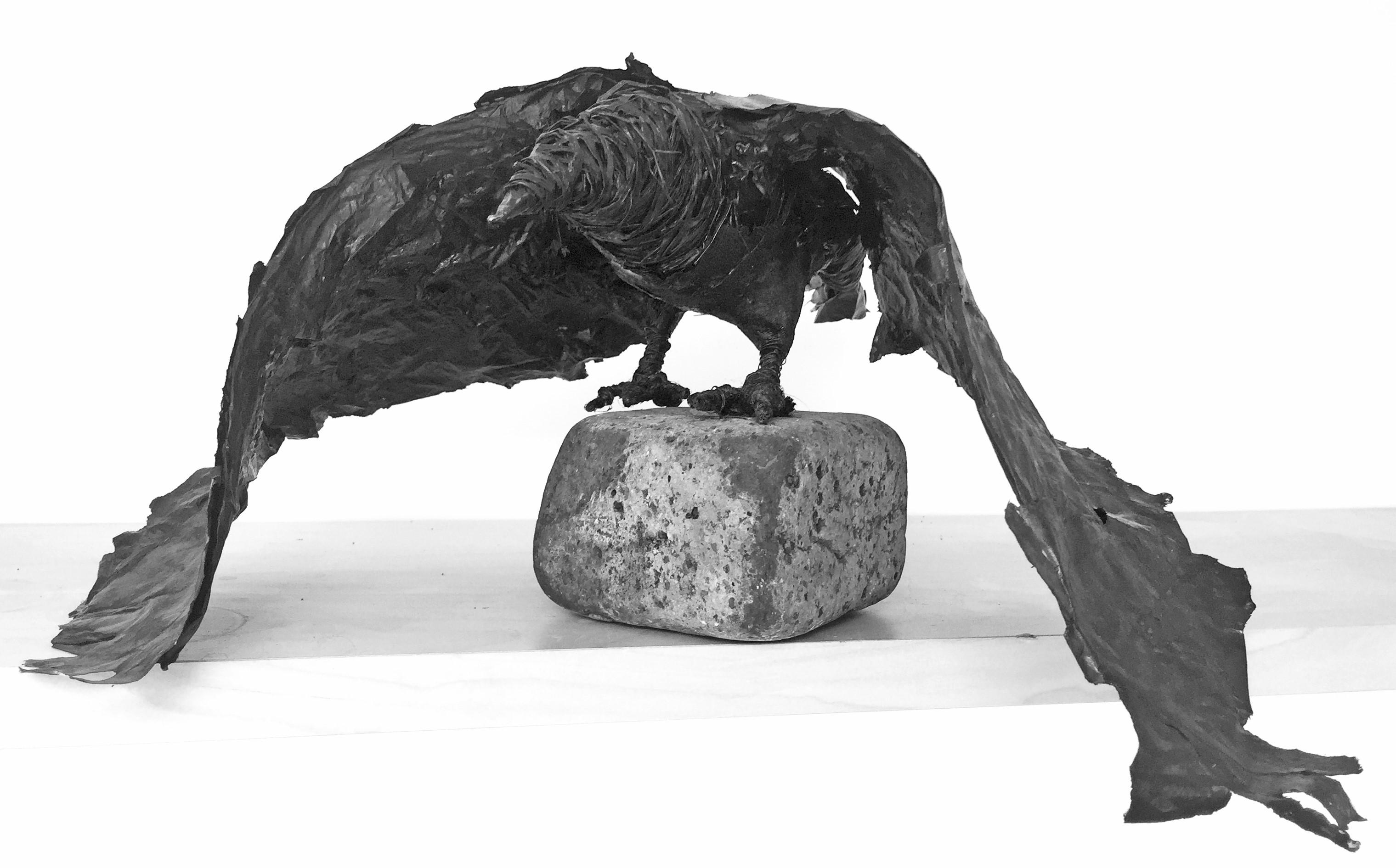 Crow Barry 1